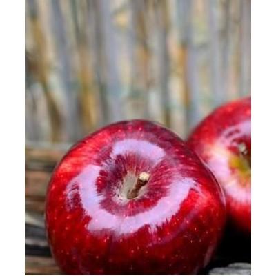 """Саженец яблони  """"Розела"""""""